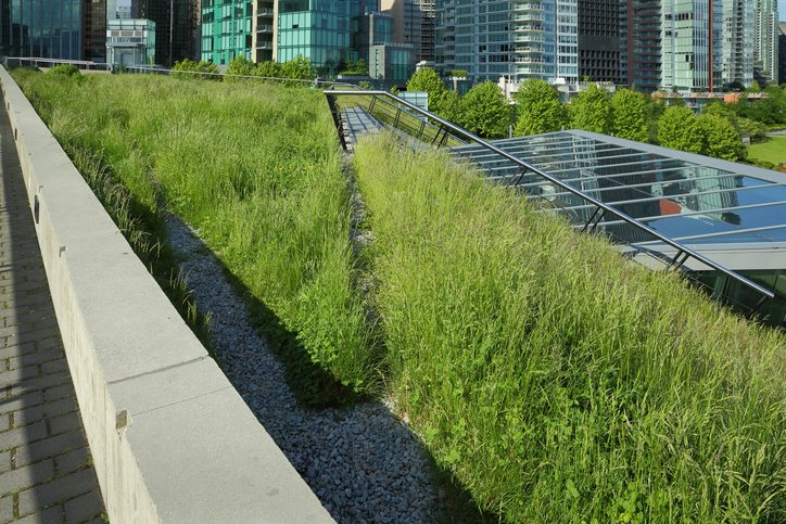 A sustainable roof features vegetation and plenty of green space